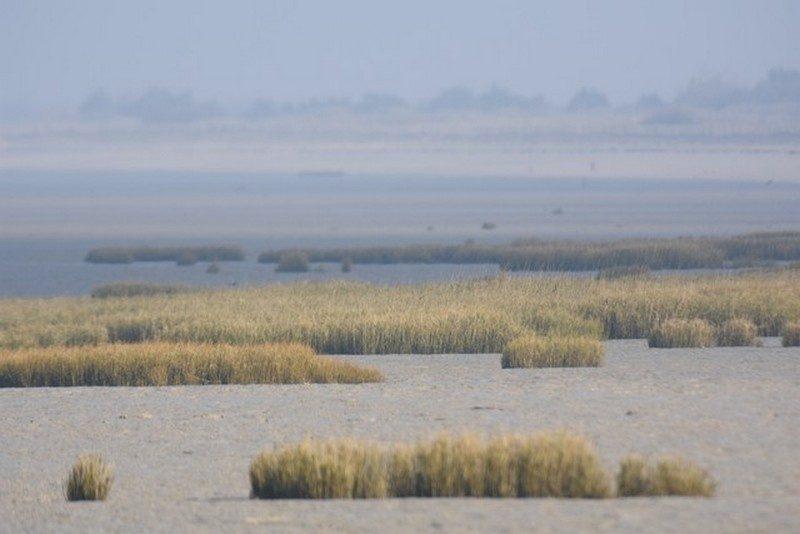 Moeze (réserve naturelle)