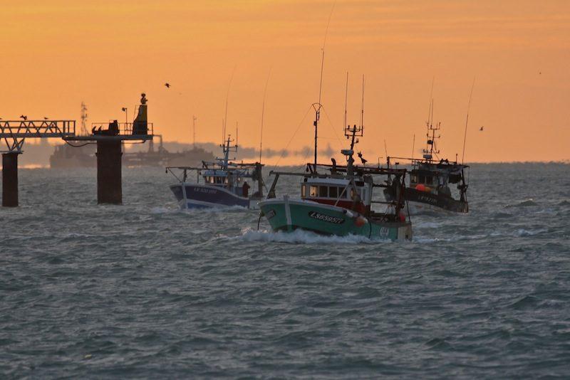flotille de pêche à la Pallice