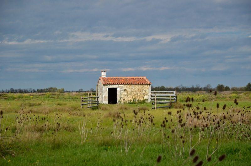 Marais de Saint-agnant