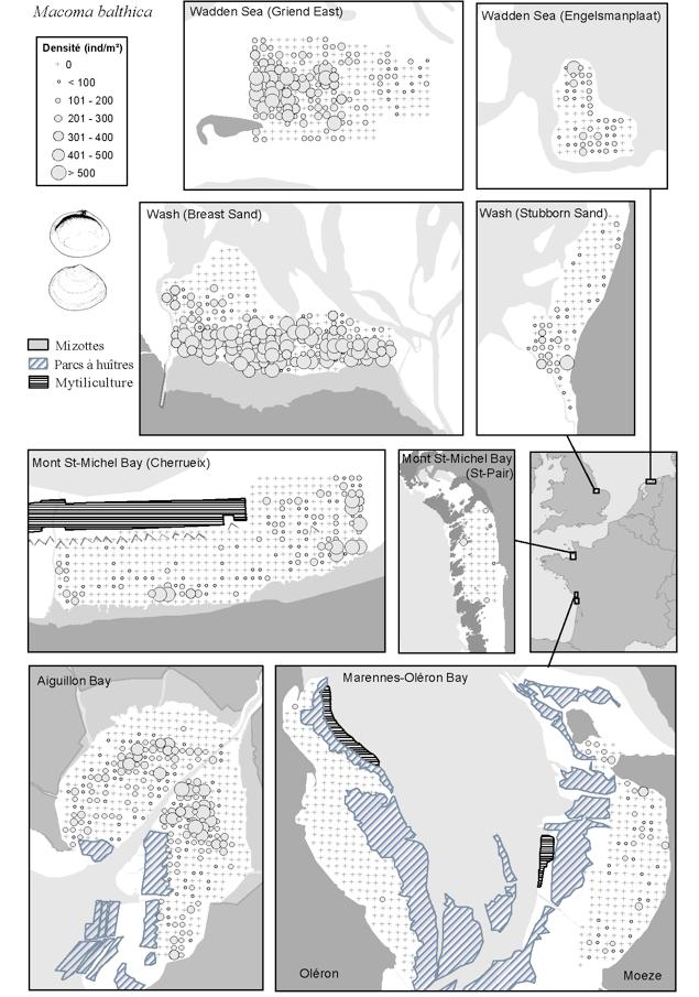 Comparaison des distributions de <em>Macoma balthica</em> exprimés en nombre d'individus par m2 sur cinq baies au nord-ouest de l'Europe.